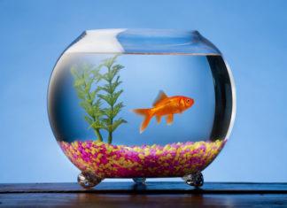 Cara Menghias Aquarium Ikan Hias