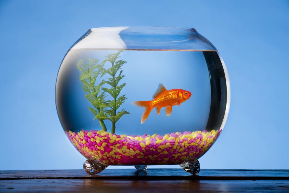 Cara Menghias Aquarium Ikan Hias Blog Ruparupa