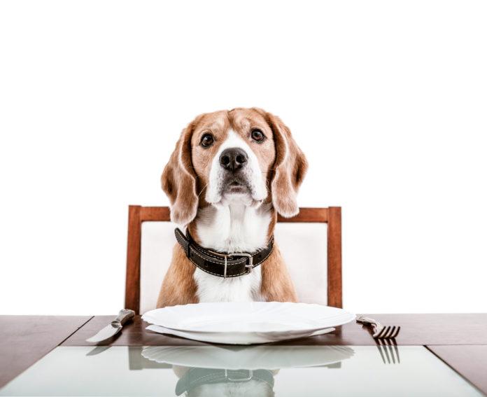 pedigree makanan anjing