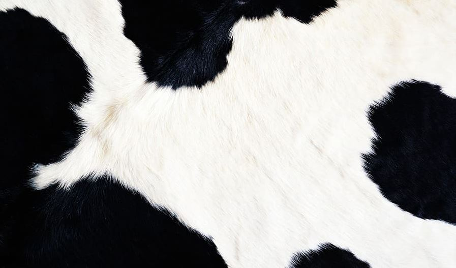 Gambar karpet berbahan kulit hewan