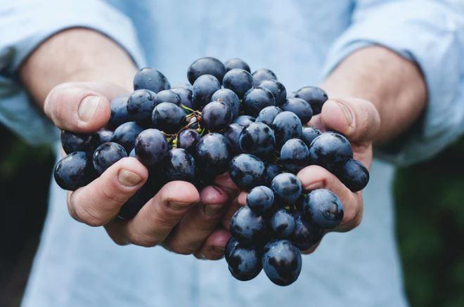 gambar anggur