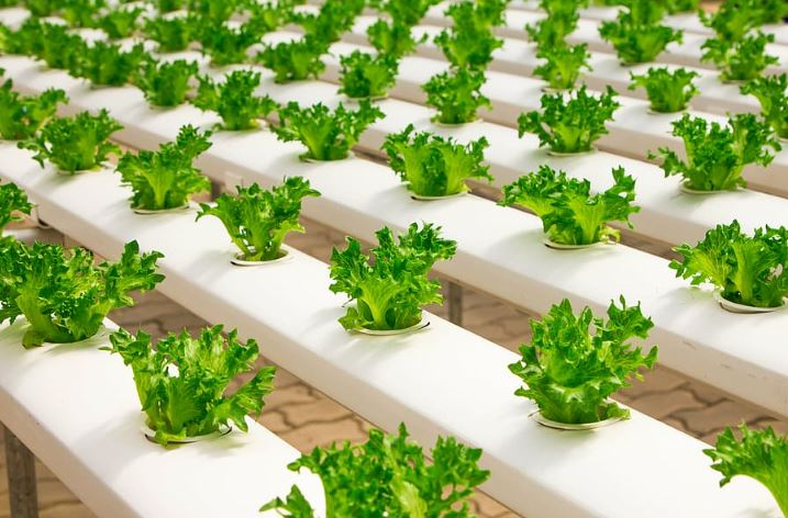 urban farming hidroponik