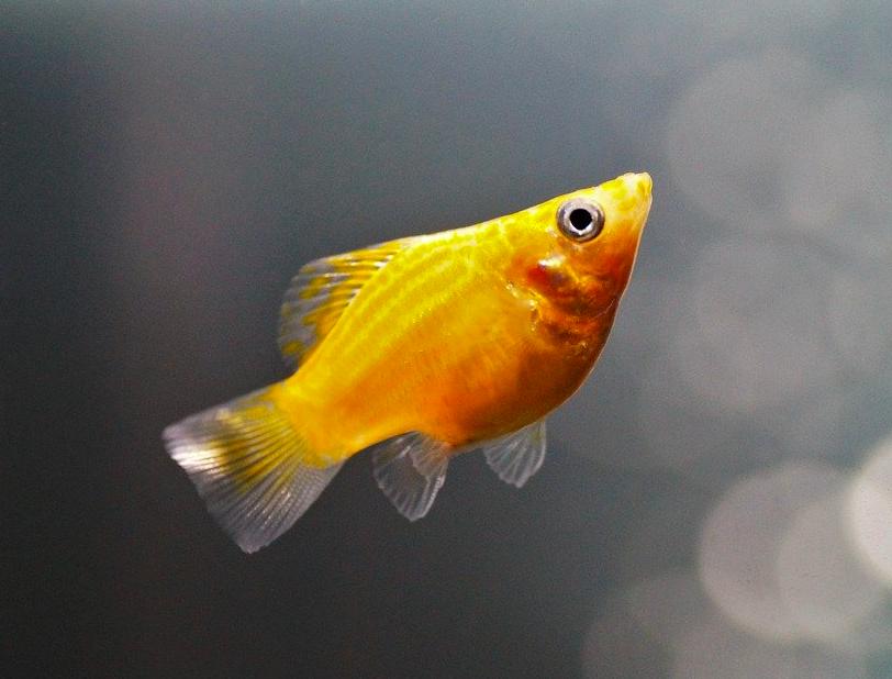12 Jenis Ikan Hias Air Tawar Yang Tidak Mudah Mati Blog Ruparupa