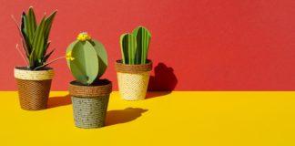 cara terbaik merawat kaktus