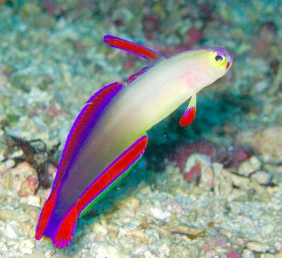 24 Ikan Hias Air Tawar Dan Air Laut Tidak Mudah Mati Blog Ruparupa