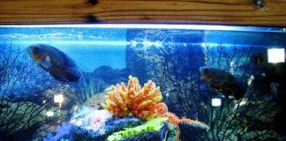 aquarium ace hardware