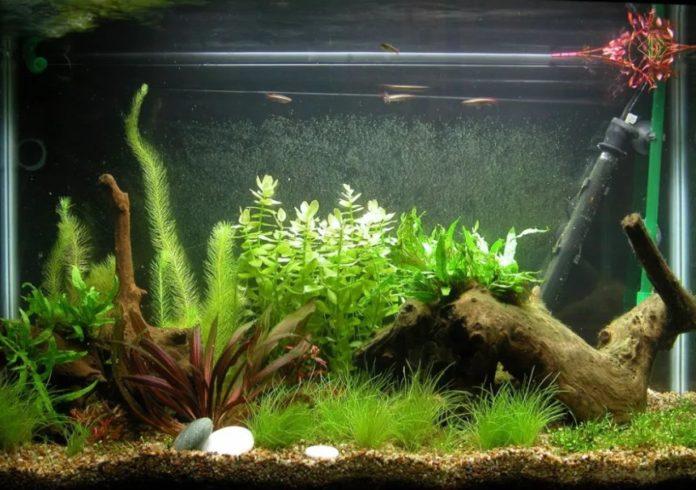 hiasan aquarium mini
