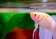 lampu aquarium mini