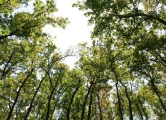 udara bersih bagi kesehatan