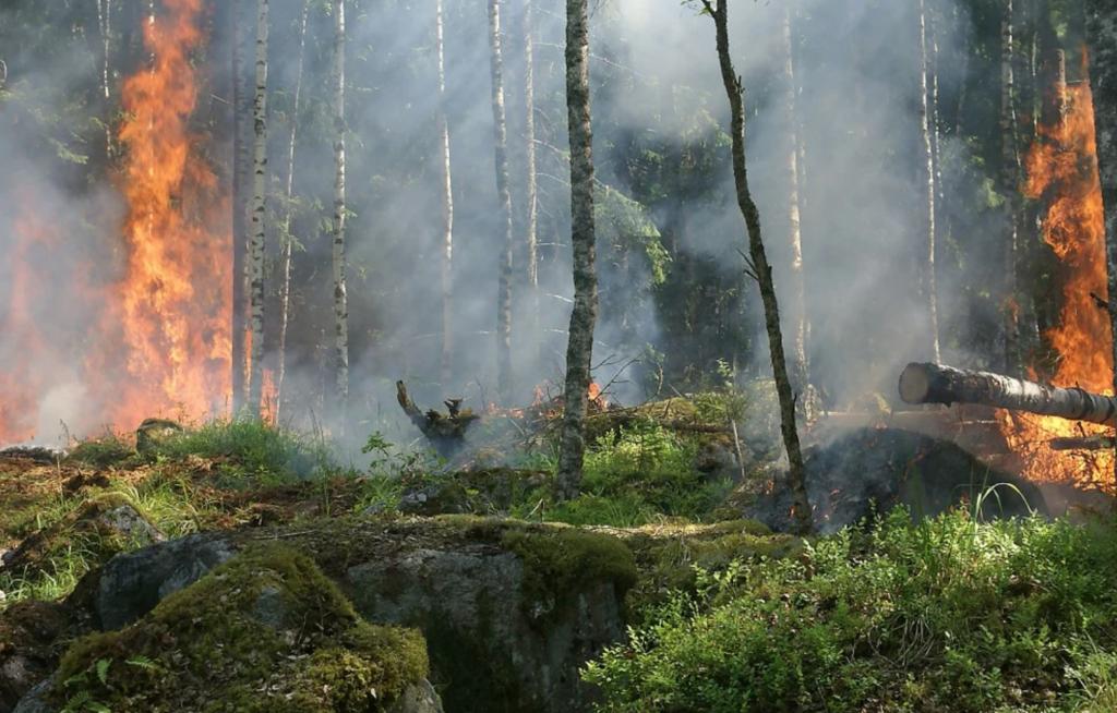 Pembakaran Hutan menyebabkan tanah tidak subur dan banjir