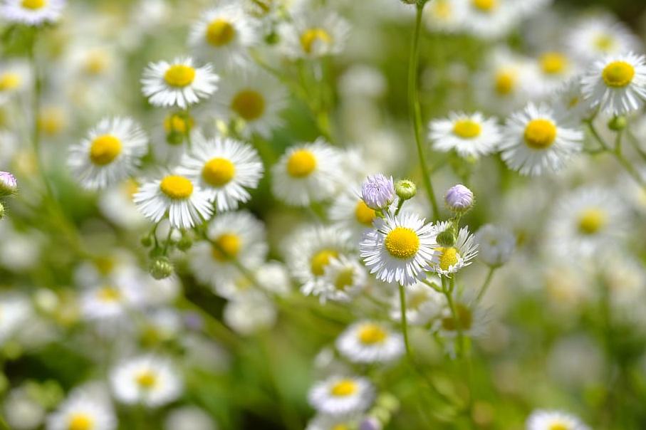 bunga obat tradisional