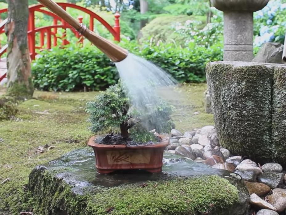 water bonsai