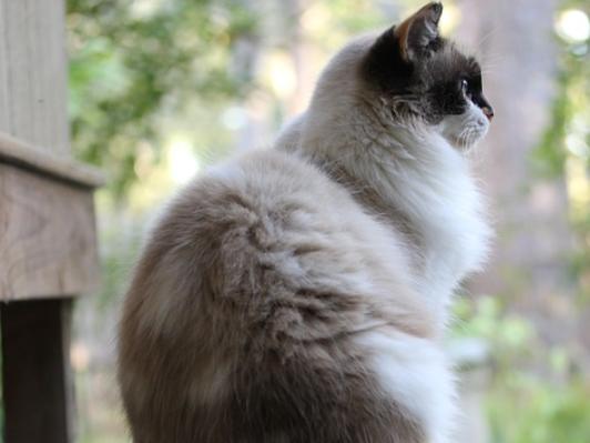 nama kucing fluffy