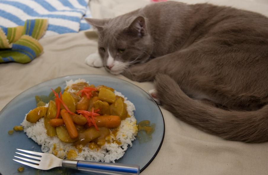 cat eat rice