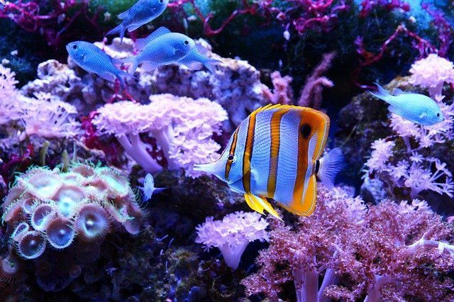 Mini aquarium light