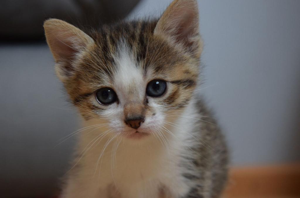 kucing saat umur satu bulan