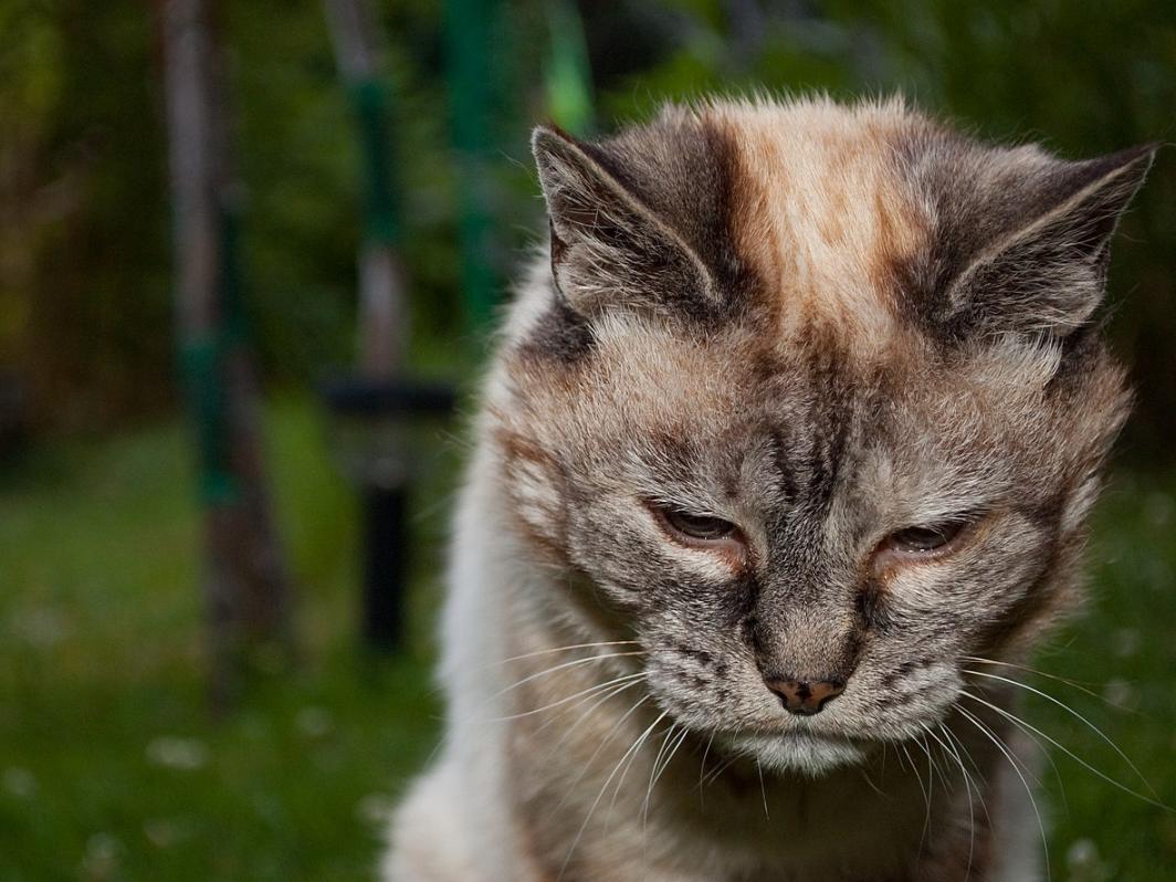 kucing saat umur tua