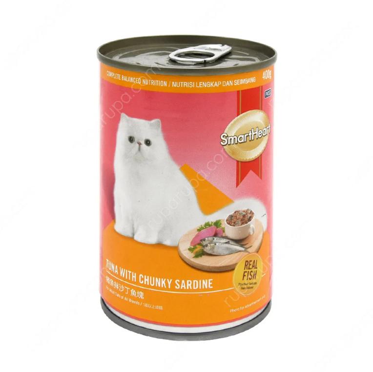 merawat kucing kecil dengan makanan kucing