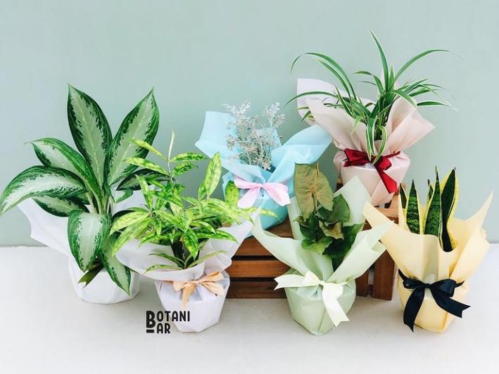 plants as Eid parcel