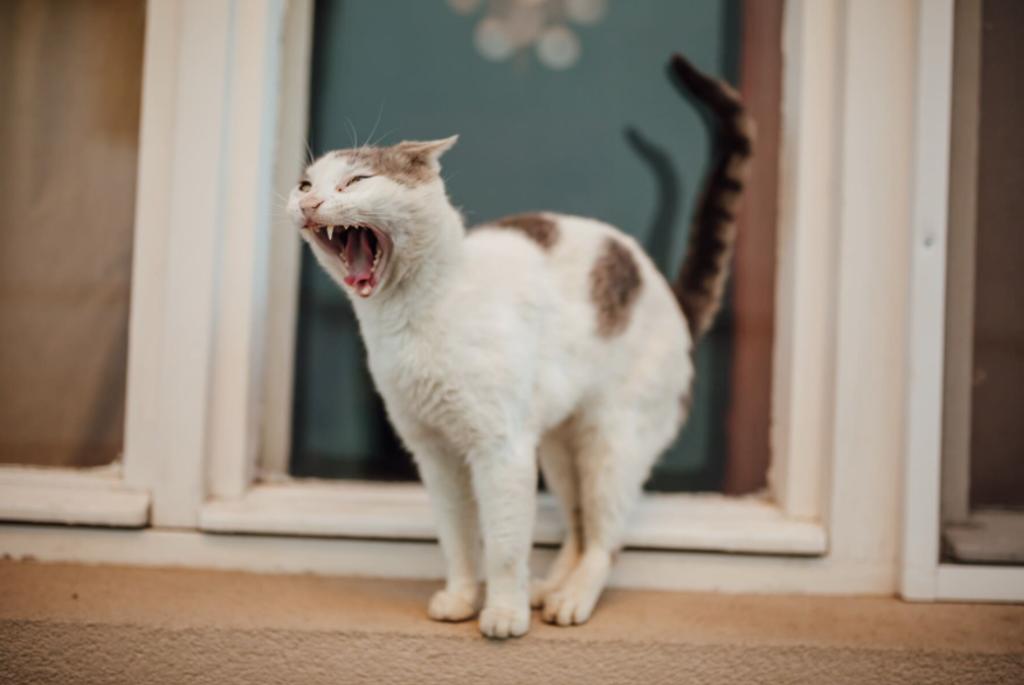 standing cat tail fur