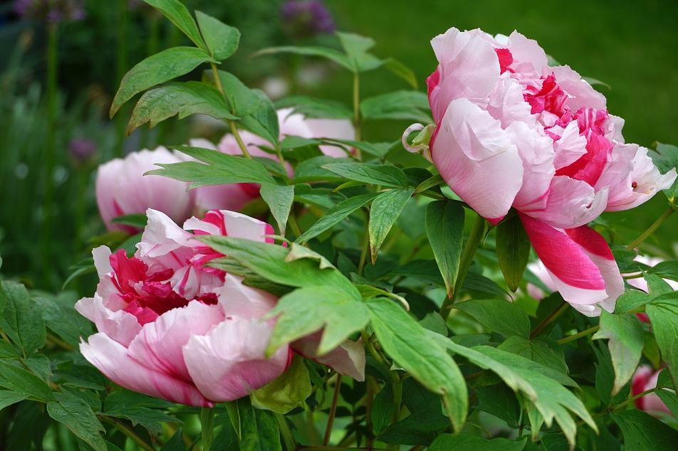 decorative plants