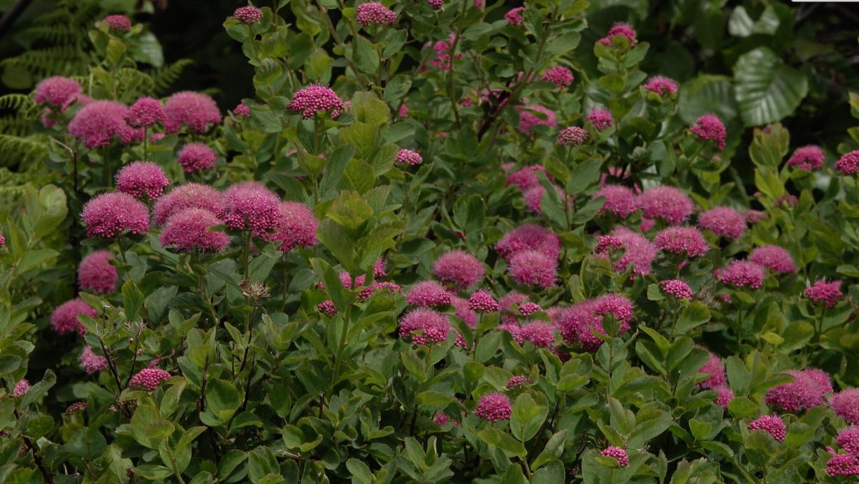 heat resistant plants
