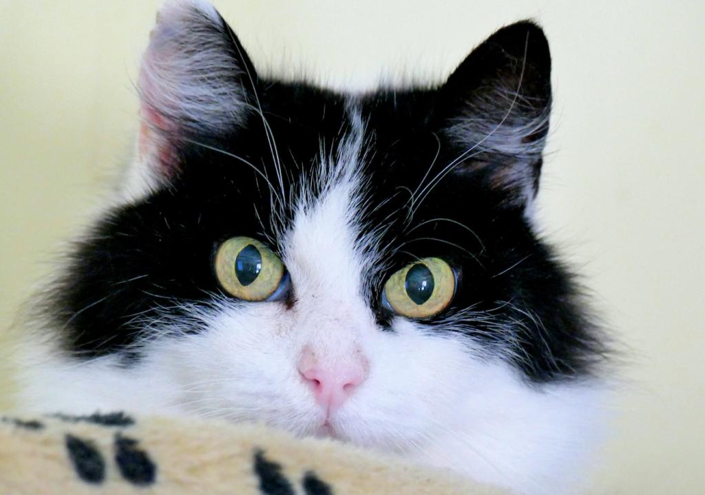 Kucing warna warni