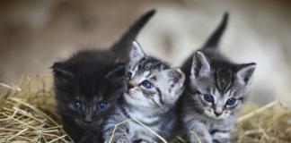 warna kucing