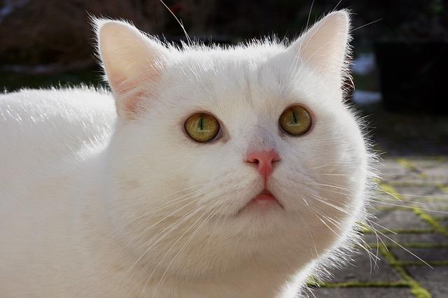 warna-warna kucing