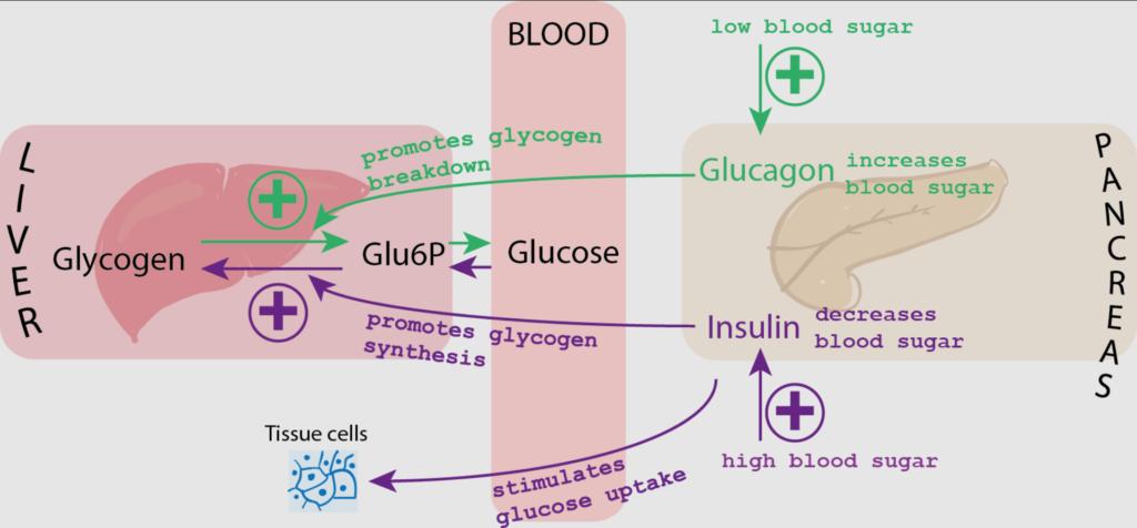 proses kadar gula darah