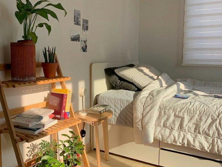 tanaman untuk desain kamar korea