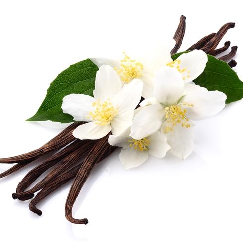 tumbuhan vanili