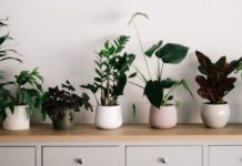 cara merawat tanaman