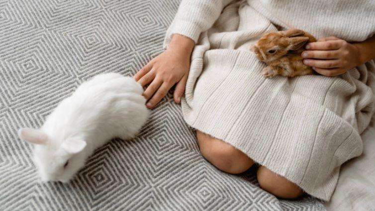 kelinci sebagai hewan peliharaan