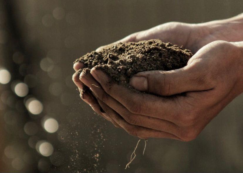 cara merawat tanaman dengan memilih media tanam