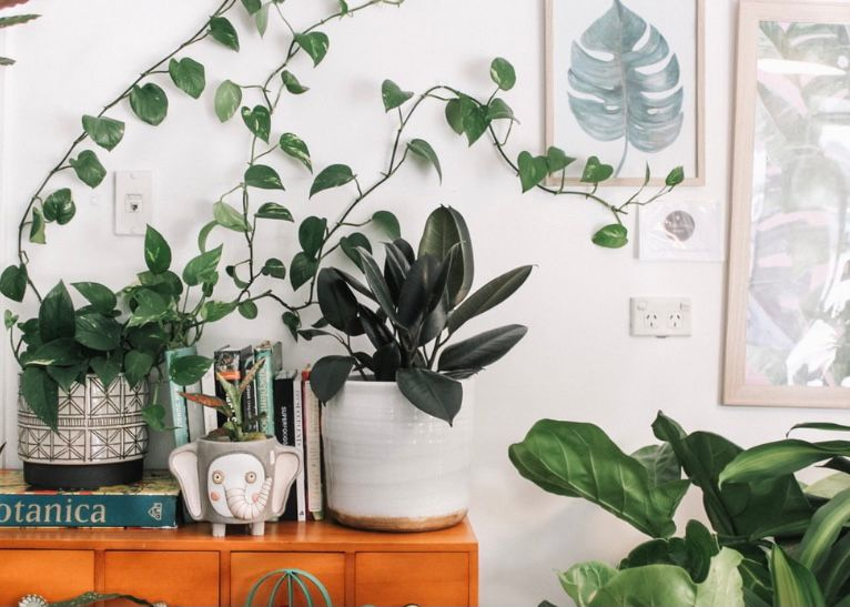 cara merawat tanaman dengan memilih tanaman