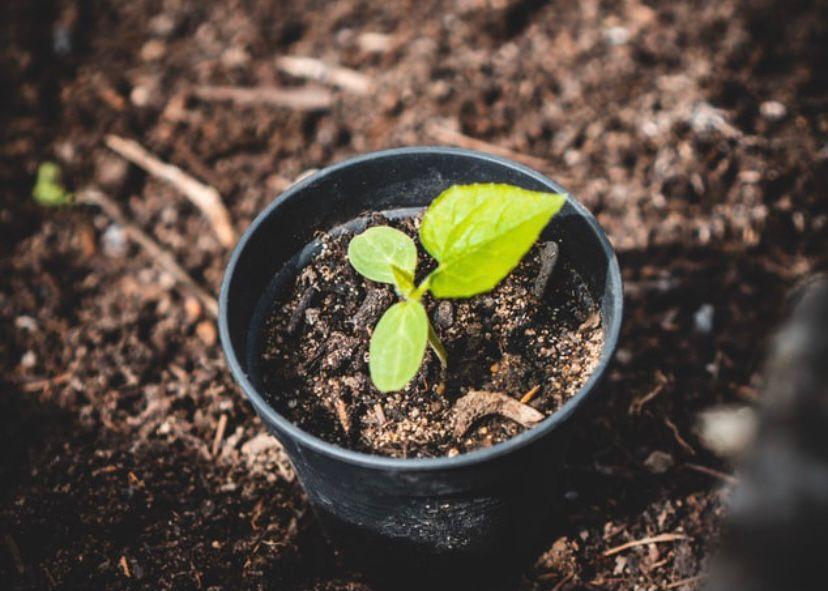cara merawat tanaman dengan sinar matahari