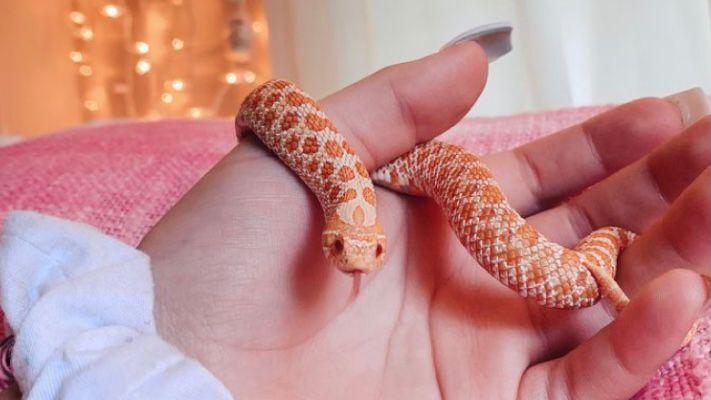 ular sebagai hewan peliharaan
