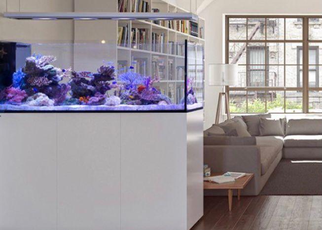 aquarium di ruang tamu dengan tutup melayang