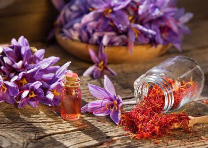 Bunga Saffron