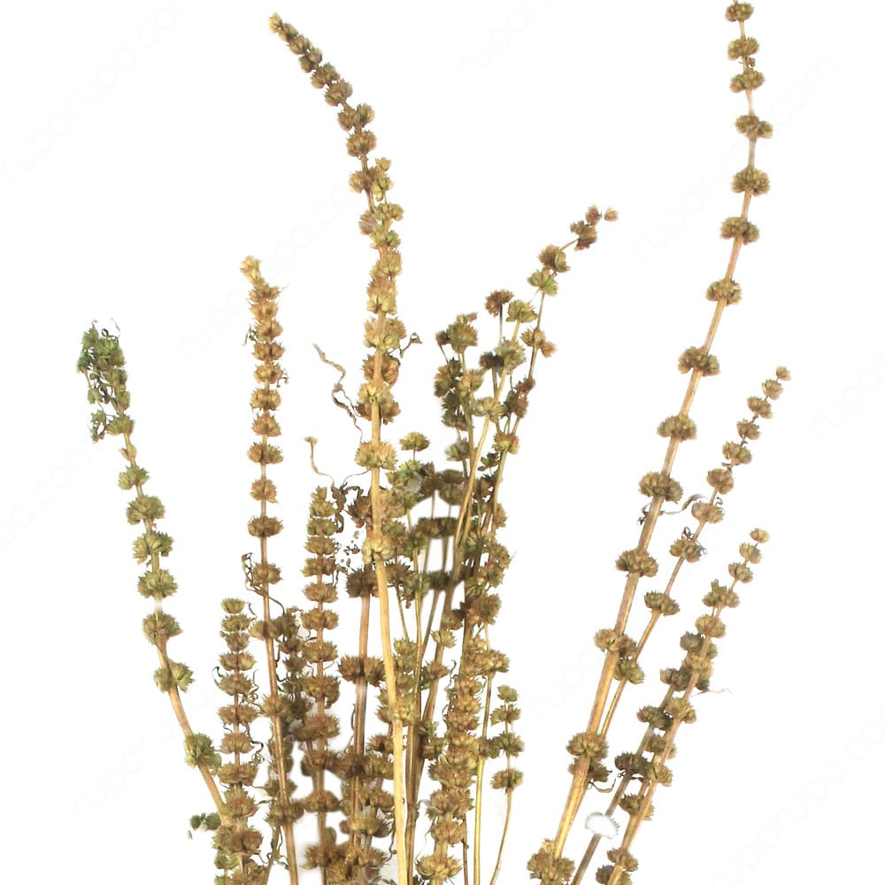 dekorasi bunga kering