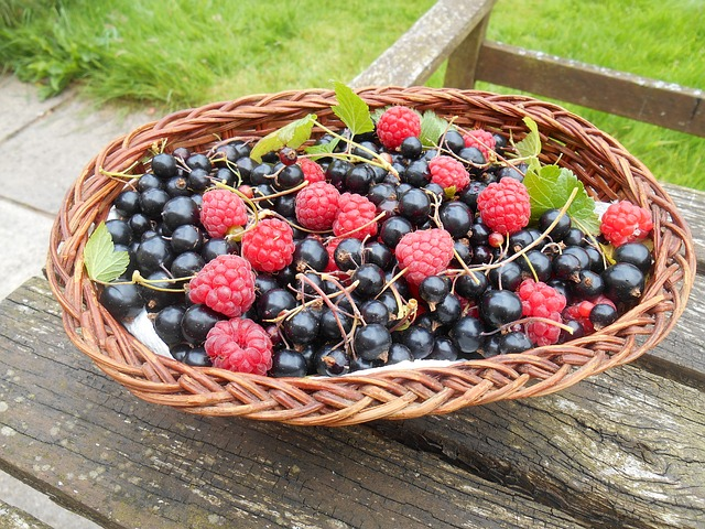 Blackcurrants sumber vitamin c