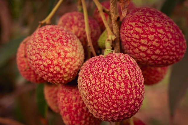 lychee buah sumber vitamin c