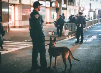 anjing polisi